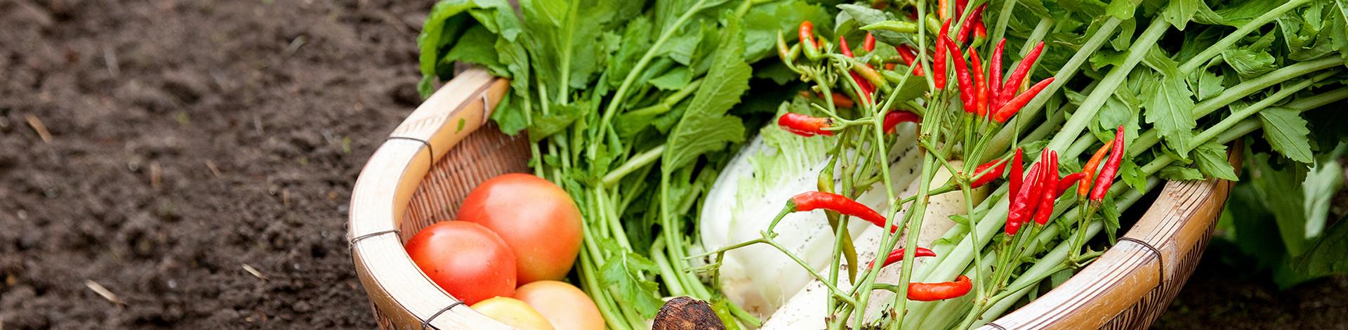 京野菜や市場には出回らない野菜・果物を取り扱っております。